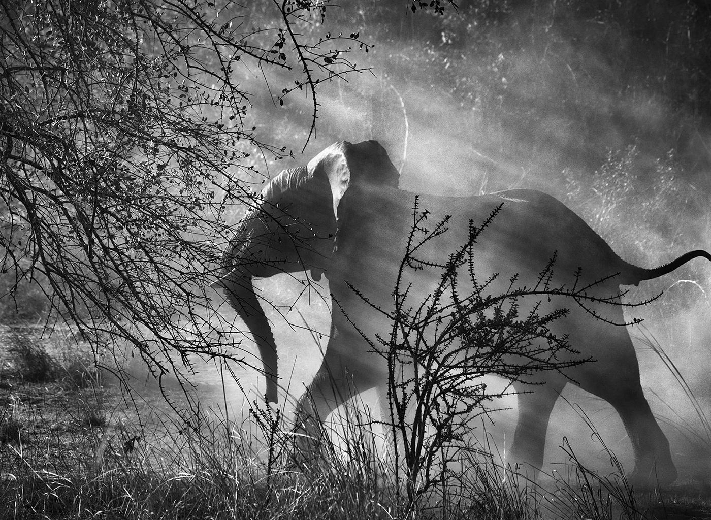 Фотографии живой природы, фотограф: Себастьян Сальгадо